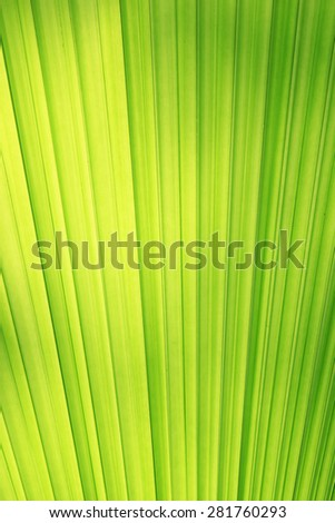 Textures of Green Palm leaves  - stock photo
