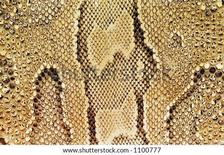 Textures – Snakeskin #03 - stock photo