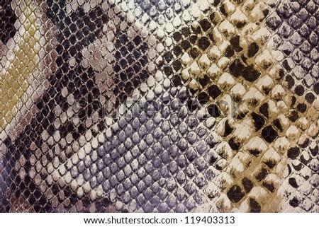 Textures snakeskin closeup on snakeskin - stock photo