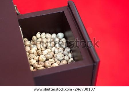 Thai cardamom elettaria cardamomin wooden drawers. - stock photo