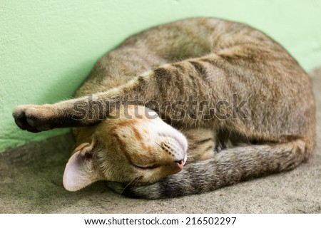 Thai cat sleep in the afternoon. - stock photo