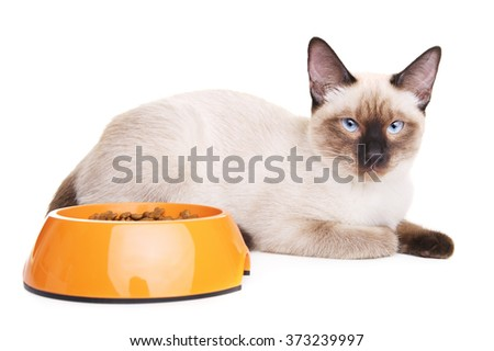 Thai Cat With Food Bowl - stock photo