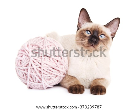 Thai Cat With Woolen Ball - stock photo