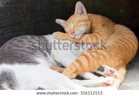 Thai Cats are sleeping together on the ground with the comfy pose - stock photo
