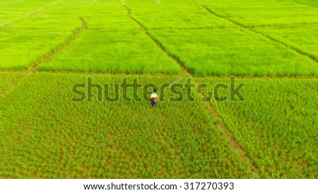 Thai farmer in the field - stock photo