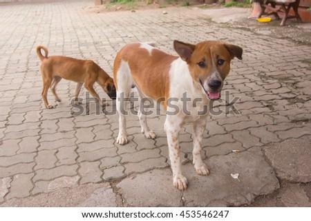 Thai stray dog - stock photo