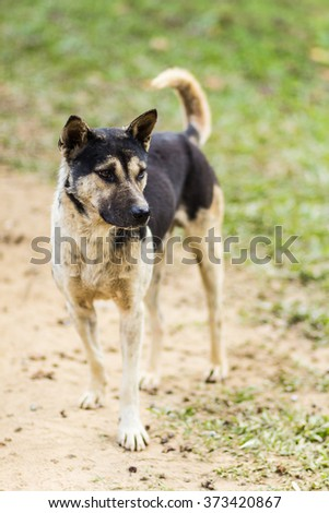 thai stray dog in grass - stock photo