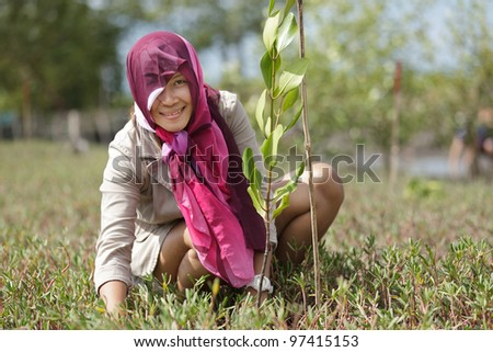 thai woman planting new mangrove tree in forest, satun, Thailand - stock photo