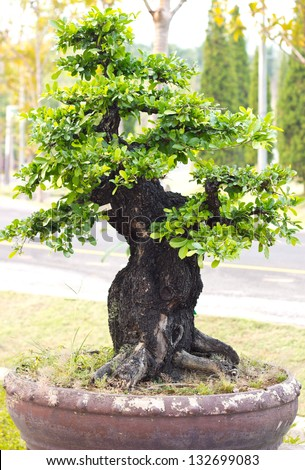 Thailand bonsai trees is beautiful - stock photo