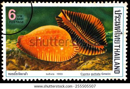 THAILAND - CIRCA 1989 : A stamp printed in Thailand shows image of Cyprea guttata Gmelin, circa 1989  - stock photo
