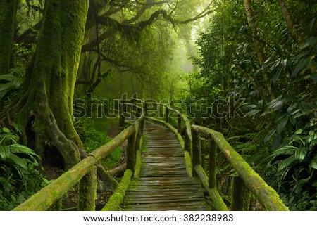 Thailand jungle - stock photo