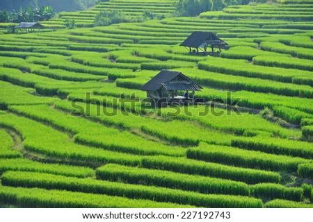 Thailand of  rice terraces. - stock photo
