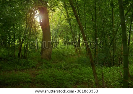 Thailand rainforest - stock photo