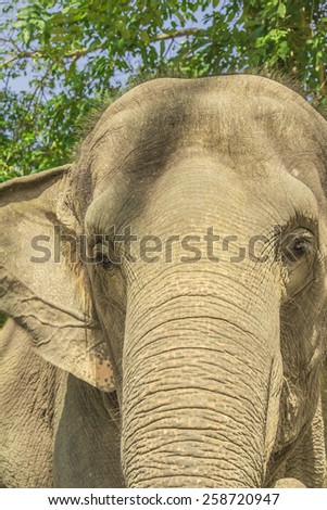 Thailand. Southeast Asia. Natural scenery. Exotic Flora and Fauna. - stock photo