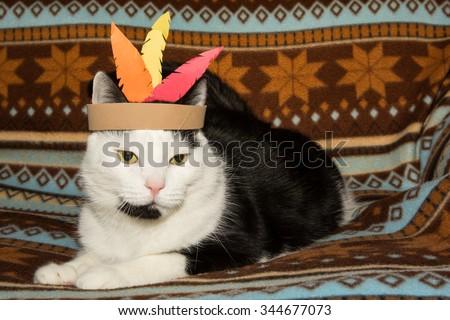 Thanksgiving Cat - stock photo