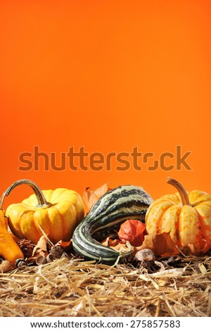 Thanksgiving - many different pumpkins on straw in front of orange background with copyspace - stock photo