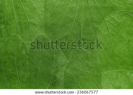 the abstract textured background a collage from big leaves of bright green color closeup - stock photo