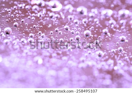 The abstraction. Dew drops on a spider web closeup - stock photo