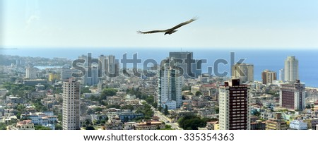 The American vultures (Cathartidae Lafresnaye) soars over Havana Cuba. Birds eye view over city of Havana,Cuba.  - stock photo