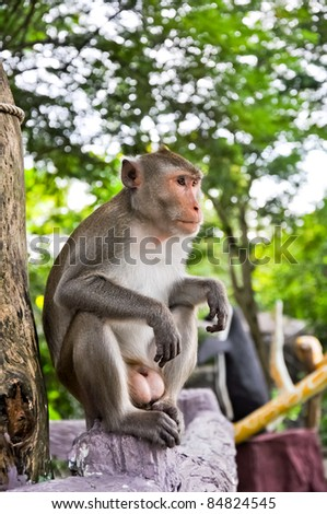 The animal life of a monkey - stock photo
