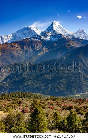 The Annapurna South, rhododendrons in bloom in the foreground, Nepal - stock photo