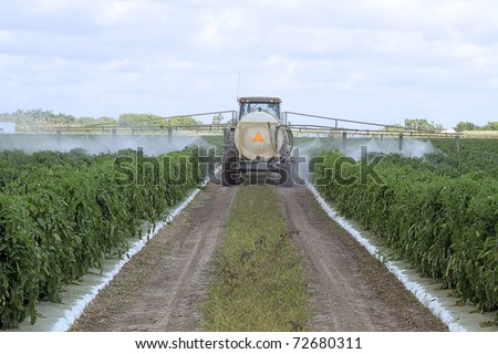 The application of pesticides on a commercial agricultural field with green tomato plants - stock photo