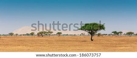 The Arabian desert on a hot sunny day - stock photo