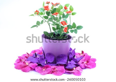 The artificial flower in the pot and pink, purple orchid flower on white background - stock photo