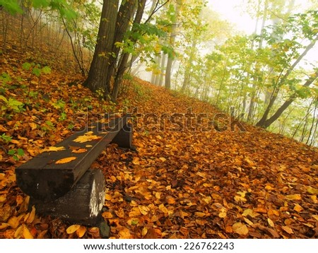 The autumn misty and sunny daybreak at beech forest, old abandoned bench below trees. Fog between beech branches without leaves.  - stock photo