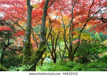 The autumnal look of the japanese garden inside the famous historic butchart gardens (built in 1903), vancouver island, british columbia, canada - stock photo