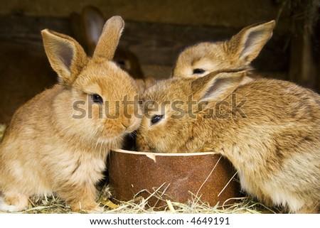 the baby rabbits - stock photo