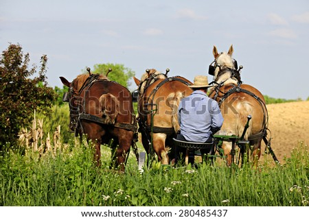 The back of an Amish man sitting on his plow seat behind three born horses on a bright spring day. - stock photo