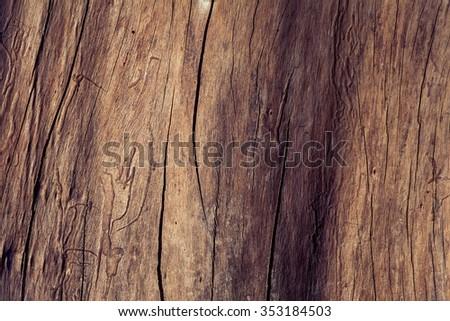 The bark of the tree. - stock photo