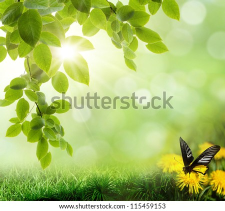 The beautiful backdrop of grass on the background bokeh - stock photo