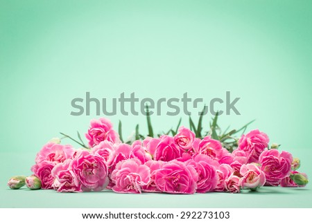The beautiful blooming carnation flowers on a blue green background with text space , vintage and retro color tone - stock photo