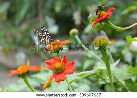 The beautiful butterfly at Chiang Mai National Park, Thailand (Taken from distance and selective focus point) - stock photo