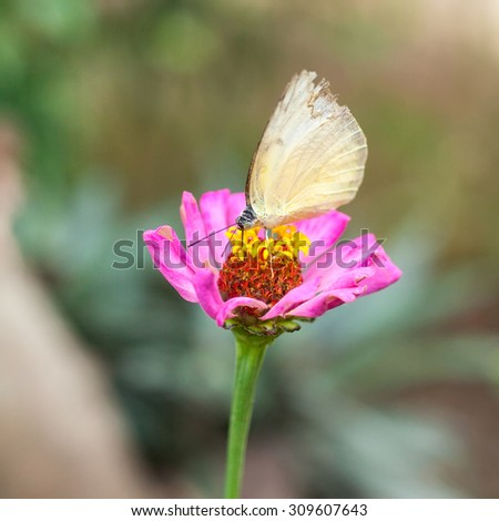 The beautiful butterfly on hand at Chiang Mai National Park, Thailand (Taken from distance and selective focus point) - stock photo