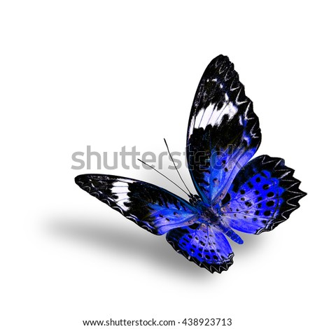The beautiful flying blue butterfly, female of Leopard Lacewing butterfly in fancyl color profile on white background with soft shadow beneath - stock photo
