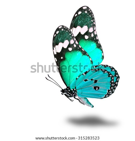 The beautiful flying light green butterfly with nice soft shadow on white background - stock photo