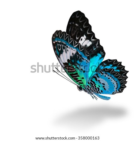 The beautiful flying pale blue butterfly, Leopard Lacewing butterfly (Cethosia cyane) in fancy color profile on white background with soft shadow beneath - stock photo