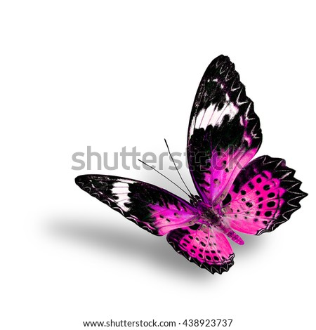 The beautiful flying pink butterfly, female of Leopard Lacewing butterfly in fancyl color profile on white background with soft shadow beneath - stock photo