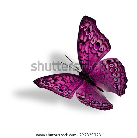 The beautiful flying pink butterfly (Junonia atlites ) isolated on white background with soft shadow beneath - stock photo