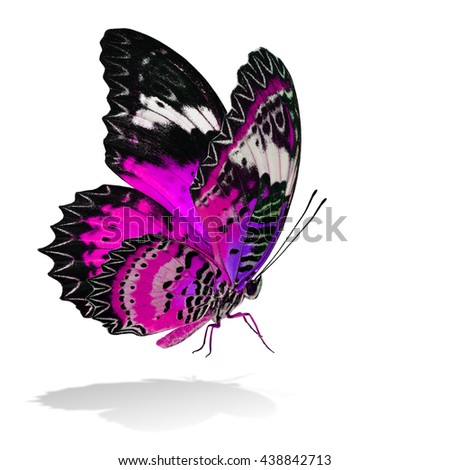 The beautiful flying pink butterfly, Leopard Lacewing butterfly in fancy color profile on white background with all legs body and wings details and soft shadow beneath - stock photo