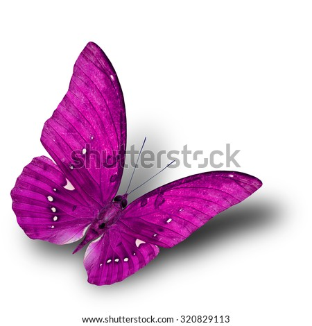 The beautiful flying pink butterfly on white background with soft shadow beneath - stock photo