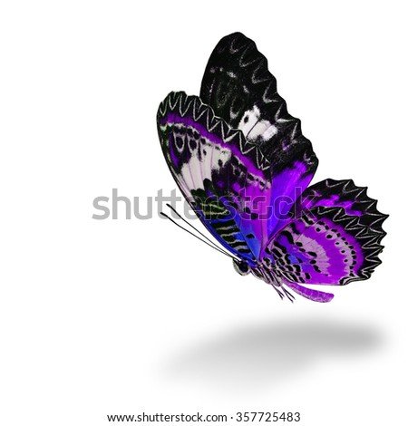 The beautiful flying purple butterfly, Leopard Lacewing butterfly (Cethosia cyane) in fancy color profile on white background with soft shadow beneath - stock photo