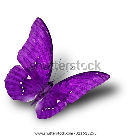 The beautiful flying purple butterfly on white background with soft shadow beneath - stock photo