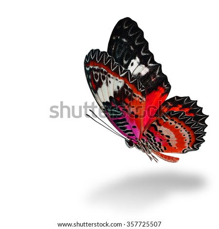 The beautiful flying red butterfly, Leopard Lacewing butterfly (Cethosia cyane) in fancy color profile on white background with soft shadow beneath - stock photo