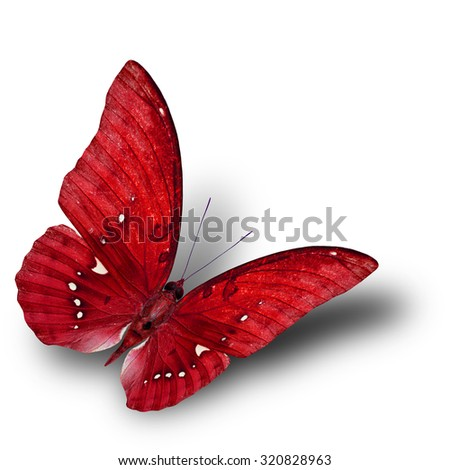 The beautiful flying red butterfly on white background with soft shadow beneath - stock photo