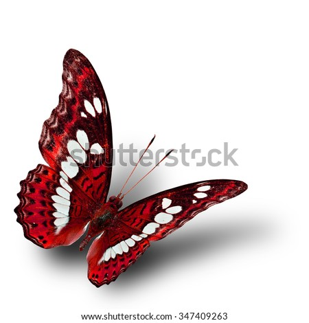 The beautiful flying red butterfly with soft shadow beneath on white background, exotic nature - stock photo