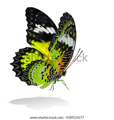 The beautiful flying yellow butterfly, Leopard Lacewing butterfly in fancy color profile on white background with all legs body and wings details and soft shadow beneath - stock photo